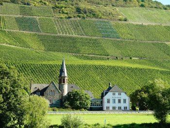 自然派ワイン ワイナリー